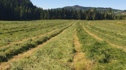 Gras i streng Svanhild Bakke